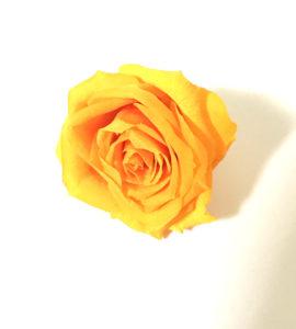 ハーバリウムローズオレンジ