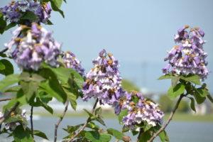岩手県の県花
