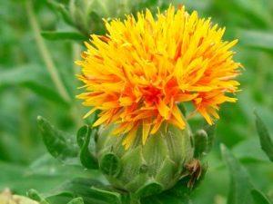 山形県の県花
