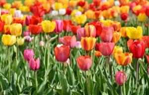 子供から大人まで愛される人気の花とは