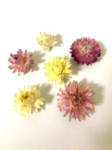 人気の花材で彩るハーバリウム