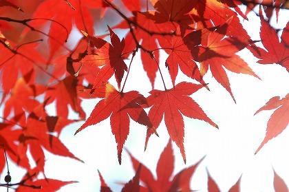 広島県の県花