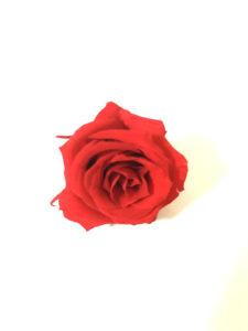 薔薇のプリザーブドフラワー