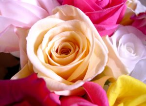 世界中で人気の花!バラのハーバリウムの魅力