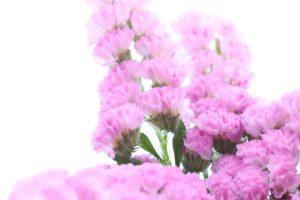 スターチスハーバリウム花材