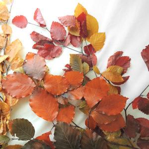 紅葉ハーバリウム花材